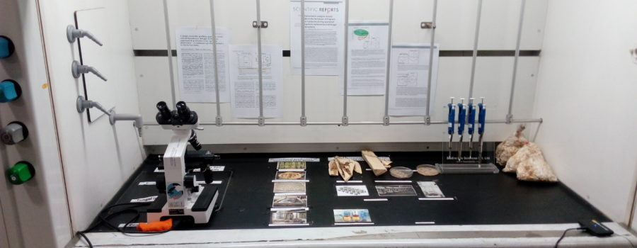 Display of Agarwood Heritage of Assam in our Lab