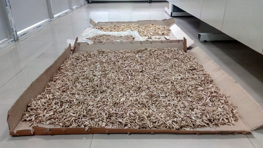Processed Resinous Agarwood Chips for Fermentation